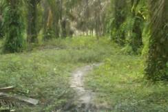 70.  Kebun Sawit S Buluh Bulian-Apriyanto (2)