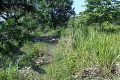 178. Tanah Pal Merah, Jambi Selatan-Irwan Awang (4)