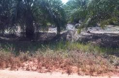 226. Tanah + kebun Sawit, Sungai Gelam, 7 M- Irwan Awang (6)