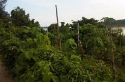 Tanah- jl Gajah Mada, Teratai, Bulian-Irwan Awang (5)
